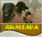 LOGO RUMSAVA