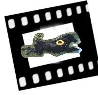 logo - video